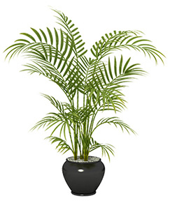 Bamboo Palms clean the air, helping you breathe easier.