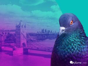 Pigeons helping tackle London air pollution
